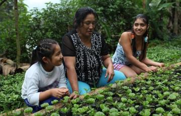 fair-trade-farmers-garden